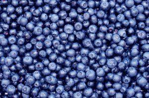 5680-blueberries.jpg