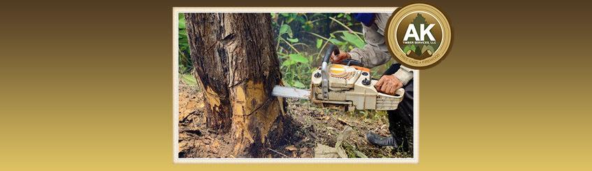 tree-removal-vancouver.jpg