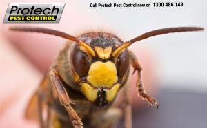 Bee-control.jpg