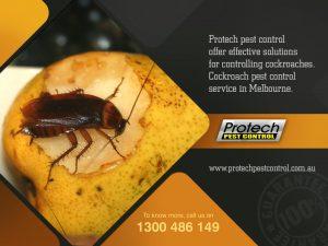 Cockroach-control-Melbourne.jpg