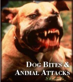 Tulsa Dog Bite Attorney.JPG