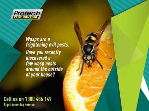 Wasp-Remove.jpg