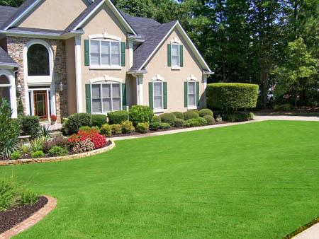 landscape front yard.jpg