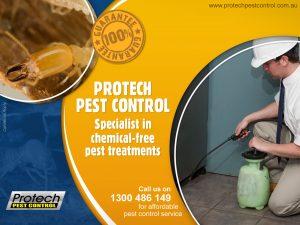 pest-treatment.jpg