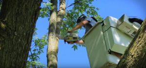 tree-removal-tuscaloosa-al