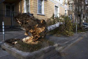 glasgow-trees-emergency-tree-services-1_orig.jpg