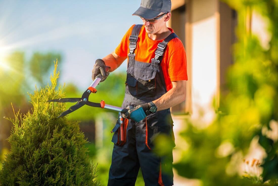 glasgow-trees-pruning-maintenance-1_orig.jpg