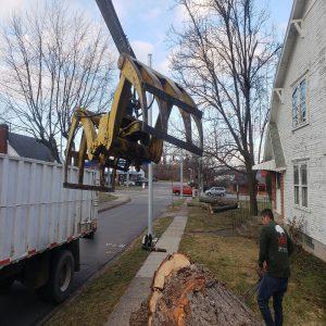 emergency tree removal englewood.jpg