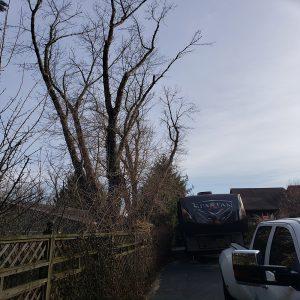 emergency tree removal kettering.jpg
