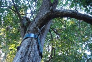tree-brace.jpg