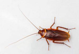cockroach-control-768x525.jpg