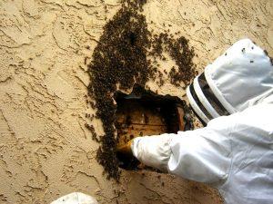 1554927803_Bee_Extermination (1).jpg