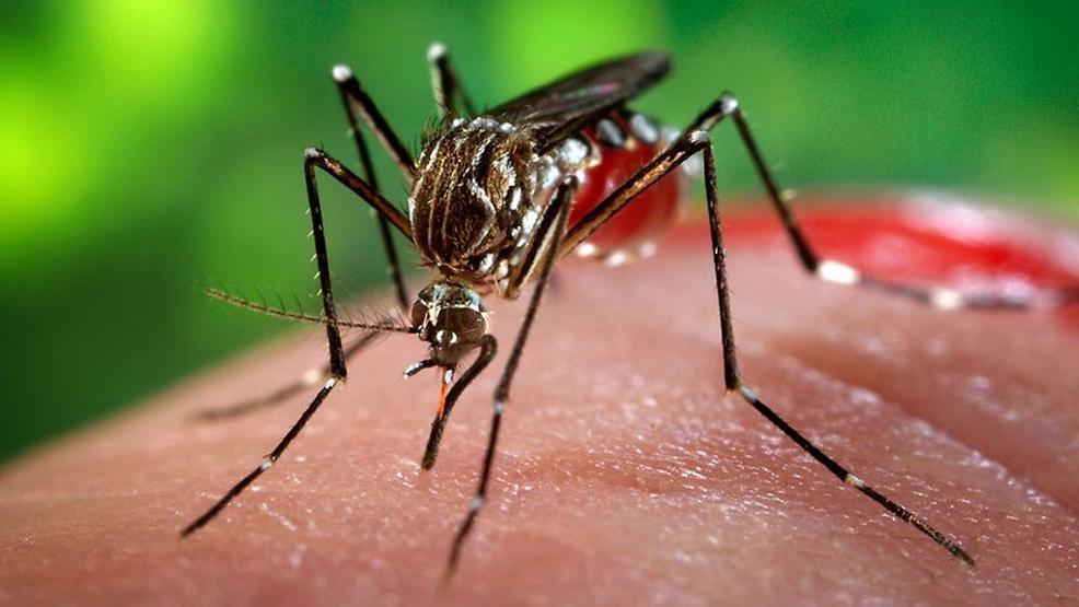 a7c5eb54-f8c9-41a6-aa7e-0ea0ab24e291-large16x9_MGN_mosquitoes_6_24_16.jpg