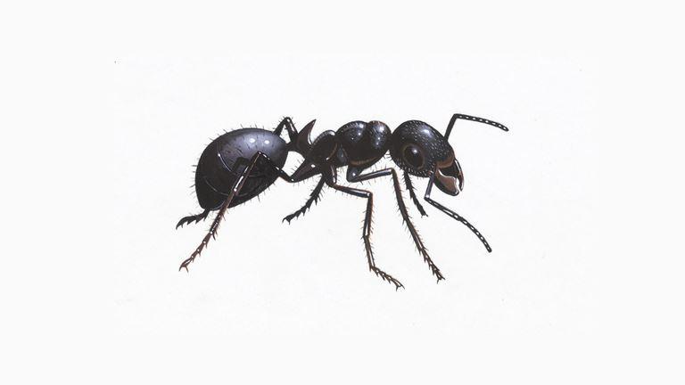 black-garden-ant_1200x675 - Copy.jpg