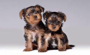 Central Park Puppies (2).jpg