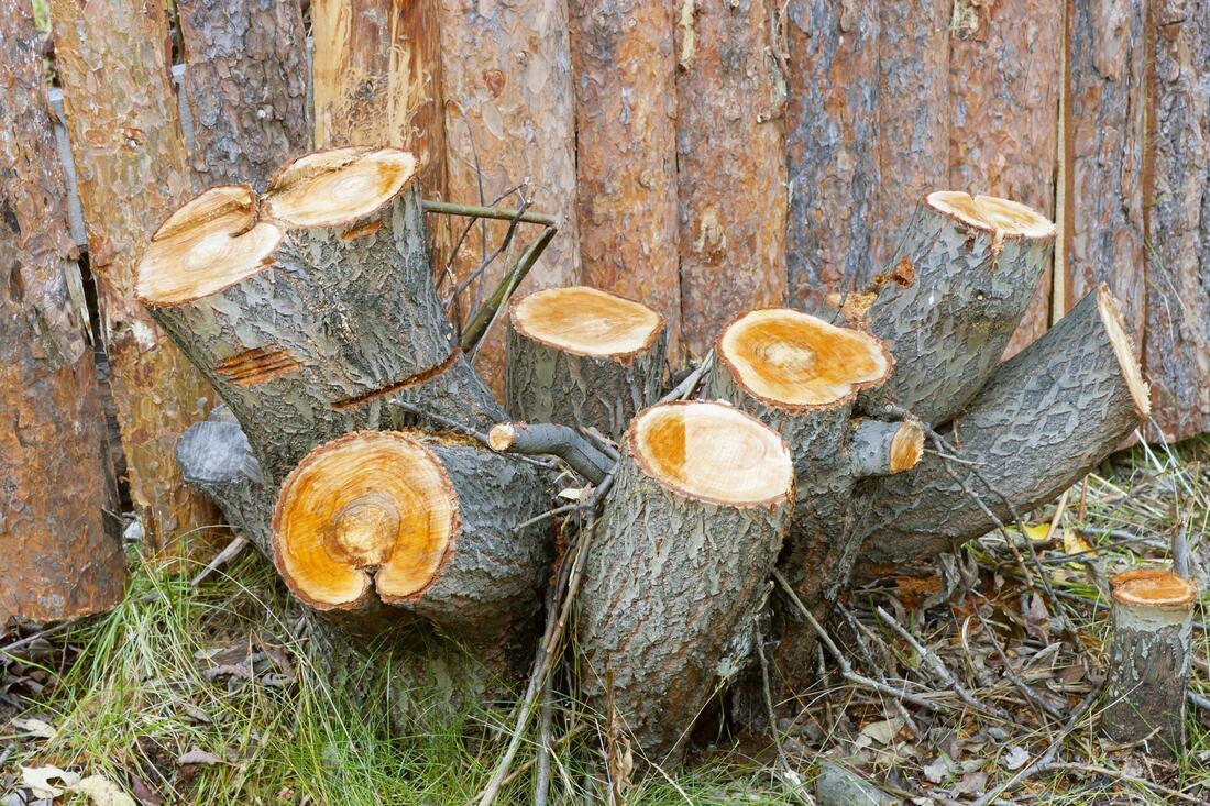 slc-tree-service-pros-stump-grinding-2_orig.jpg