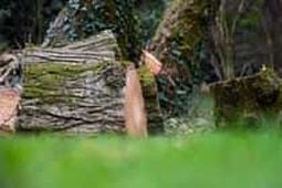 stump-removal-4_1.jpg