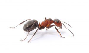 Ant-Control-O
