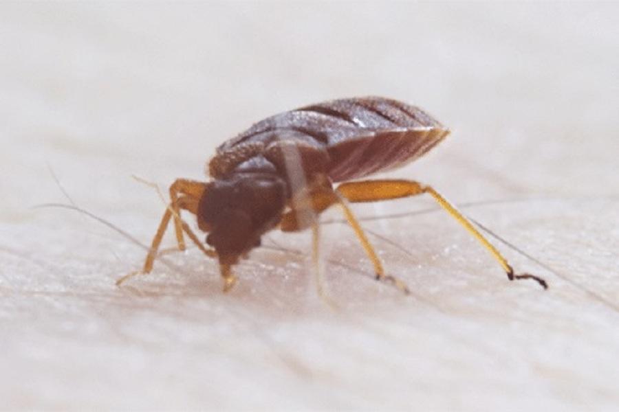 Exterminator Near Simi Valley.jpg