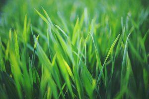 Lawn-Mowing-Newcastle.jpg