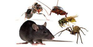 Pest-Control-Brisbane.jpg