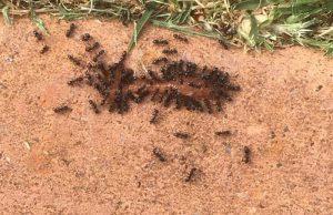 Pest-Control-Services-Melbourne.jpg