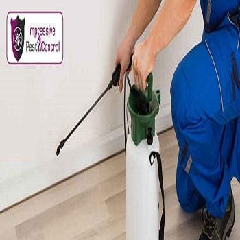 Professional-Pest-Control-Service-Brisbane-4.jpg