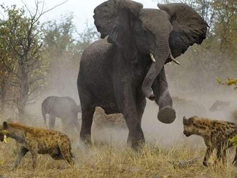 African Safari Tours.jpg