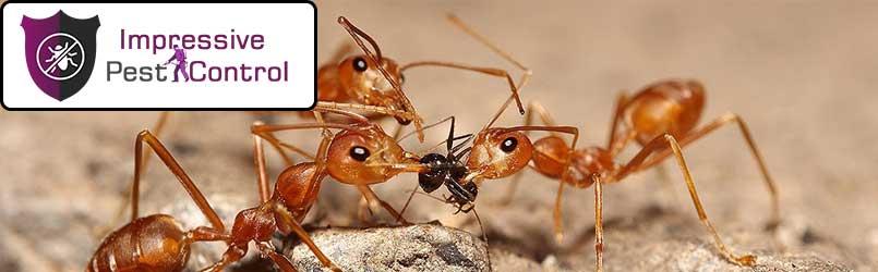 Ant-Control.jpg