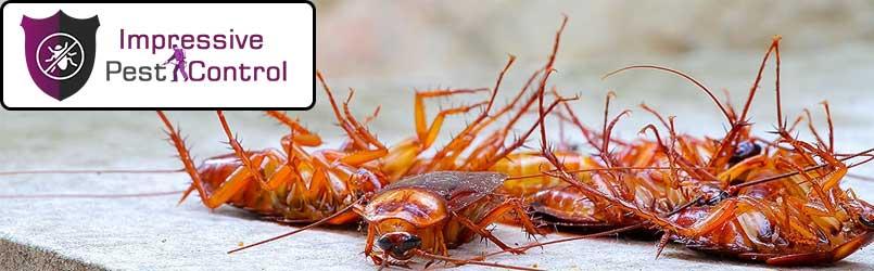 Cockroach-Control.jpg