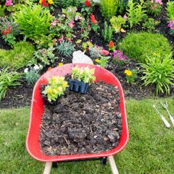 Re-mulching Flower Beds.jpg