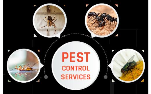 Pest-Control-Brisbane-1.png
