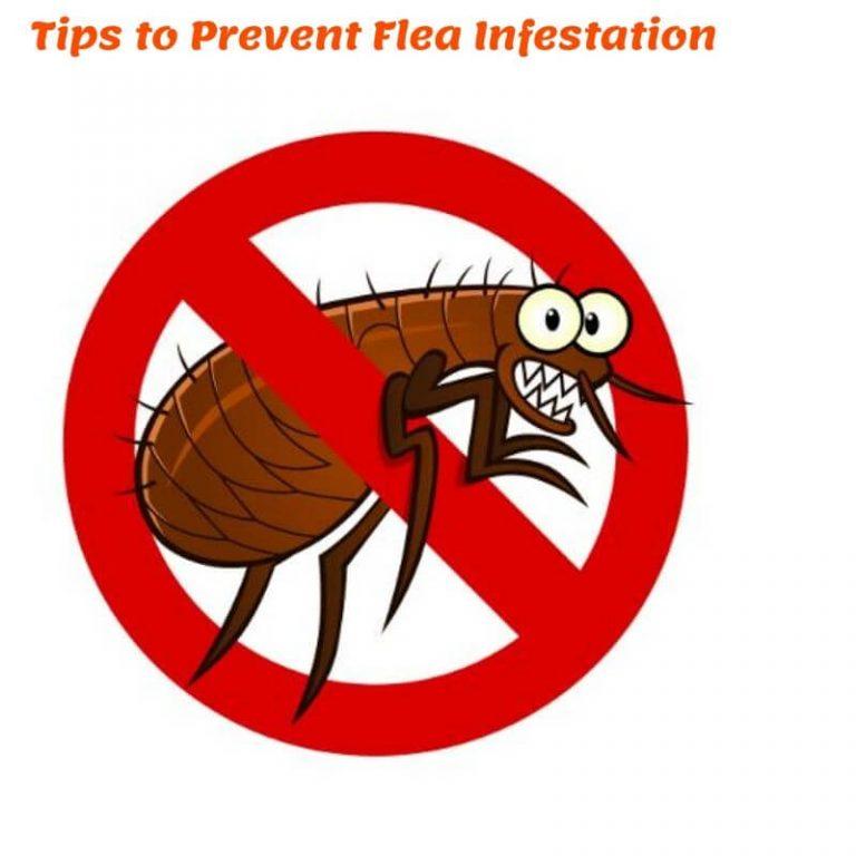 Tips-to-Prevent-Flea-Infestation-1-1-768x768.jpg