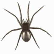 cropped-pest-control-logo-1-180x180 jpg.jpg