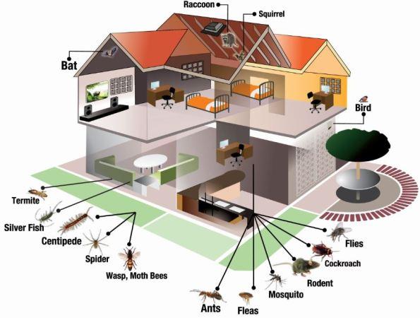 home-pest.jpg