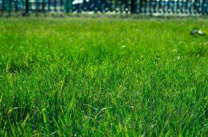 lawn-327333_1920.jpg