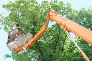 tree-triming.jpg