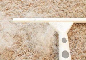 Pet-Hair-Removal-from-Carpet-7.jpg