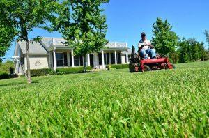 lawn-care-1024x678.jpg
