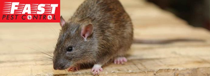 Rodents-Control-Brisbane-1.jpg