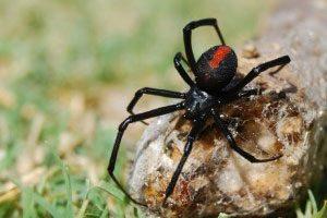 Spiders-Control-Brisbane-3.jpg