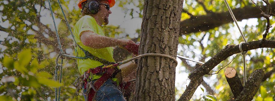 Tree service.jpg