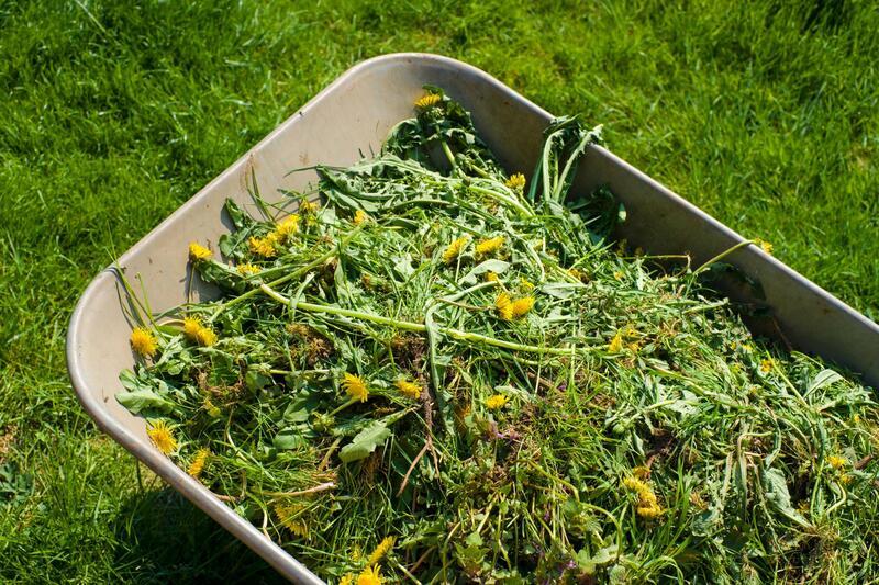rowlett-lawn-landscape-fertilization-weed-control-1.jpg