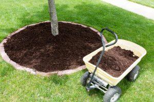 rowlett-lawn-landscape-fertilization-weed-control-2_orig.jpg
