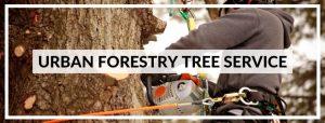 URBAN-FORESTRY-TREE-SERVICE-820.jpg