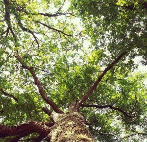 Emergency Tree Service in Stamford CT 2.jpg