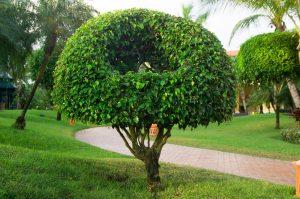 pittsburgh-tree-pros-tree-fertilization-planting-1_orig.jpg