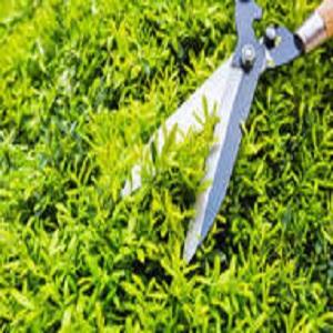 00 logo-BV Landscaping.png