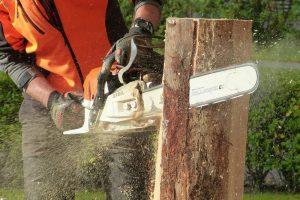 slicing-through-a-log_orig