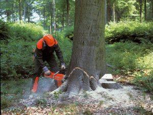 tree-being-cut-down-e1559152531124.jpg